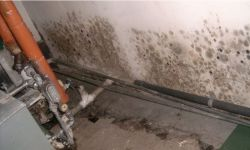 basement mold cleanup