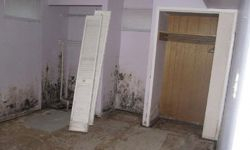 mold mould removal company 4
