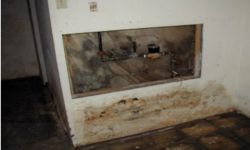 mold mould removal company 7