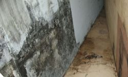 mould removal company 1