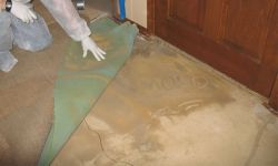 mould removal company